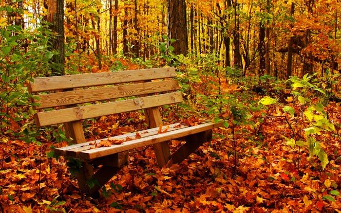خزان پاییز در نیمکره شمالی زمین آغاز میشود