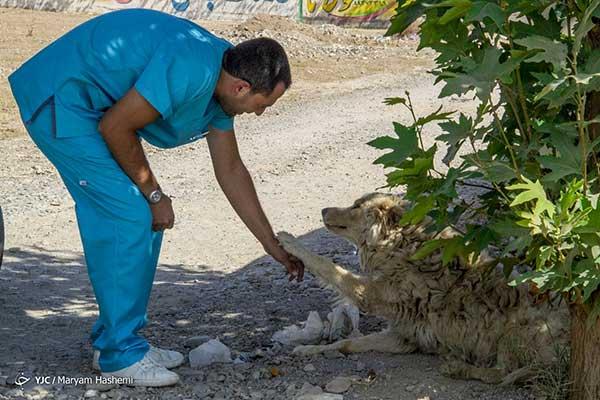 بزرگترین مرکز بستری حیوانات در ایران+عکس