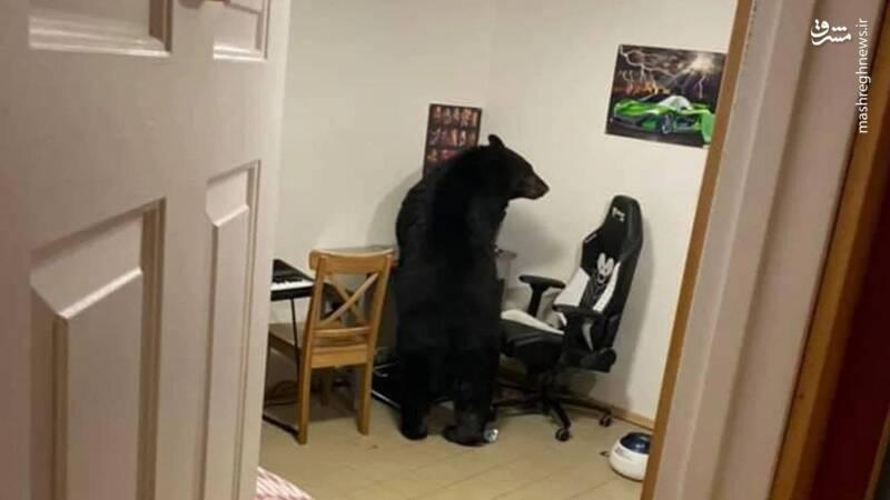 ورود خرس به خانه یکی از شهروندان+عکس