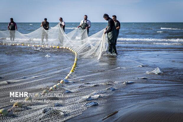 صید ماهی های استخوانی همزمان با دیگر مناطق در سواحل استان مازندران