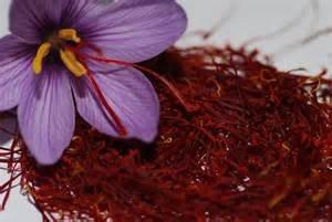 زعفران، مانعی در برابر از بین رفتن فولیکولهای تخمدان