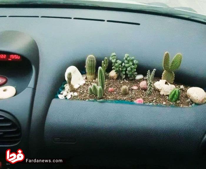 باغچه کاکتوس در خودرو ۲۰۶! +عکس