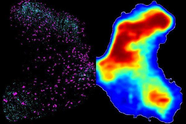 ژن درمانی نخاع آسیب دیده را درمان می کند