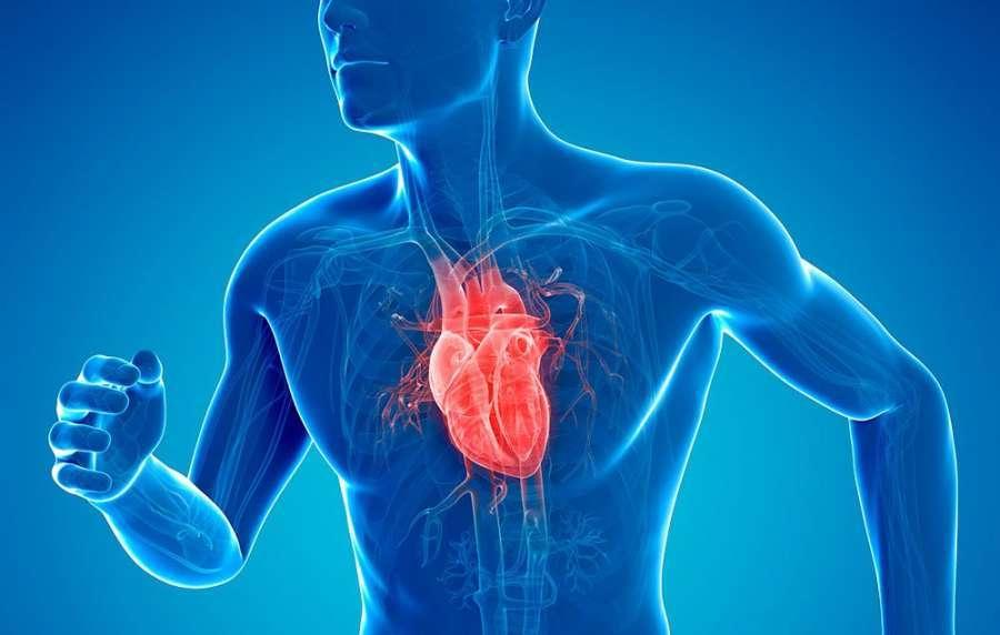اقدامی ساده که رگهای قلب را جوان نگه میدارد