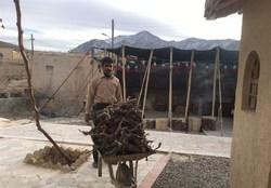 یوروهای گردشگران خارجی در جیب روستایی بی سواد +تصاویر