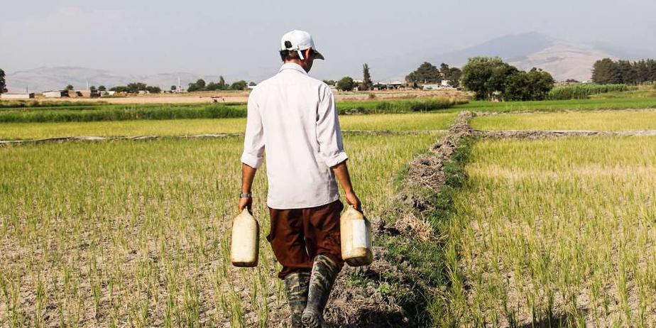 تصاویری از رخ نمودن خشکسالی در شالیزارهای گلستان
