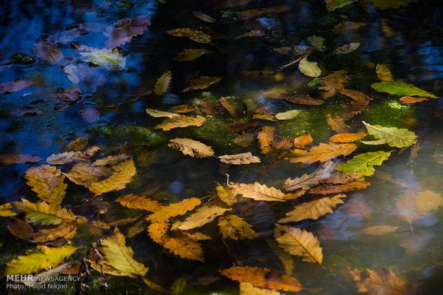 فصل پاییز از چه ساعتی آغاز میشود/ اعتدال پاییز از دیدگاه نجوم