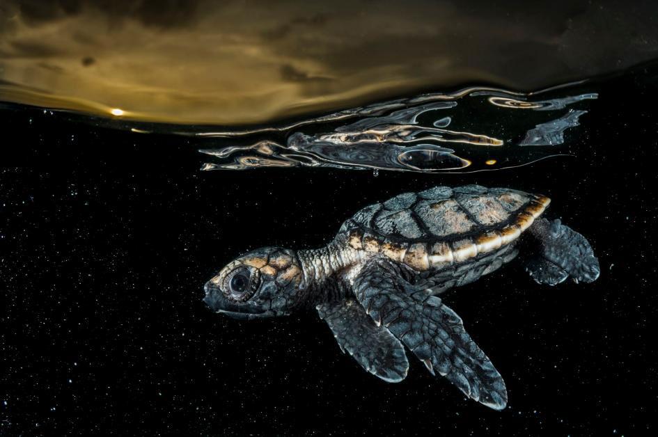 عکس روز نشنال جئوگرافیک؛ اولین شنا