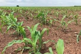 ابداع اپلیکیشنی که به بهبود کشاورزی کمک میکند