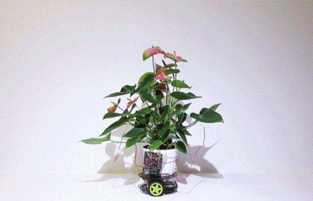 ابداع گیاه سایبورگ که به سمت نور حرکت میکند