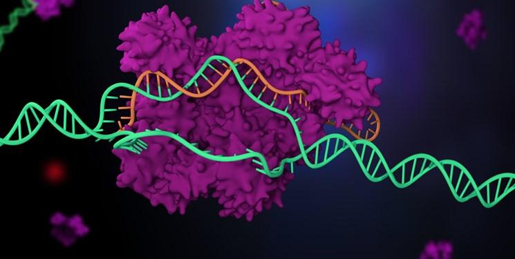 بیماران سرطانی به کمک «مهندسی ژنتیک» درمان میشوند
