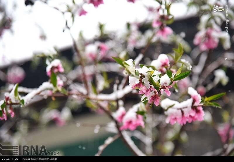 برف زنجان را هم سفید پوش کرد +عکس