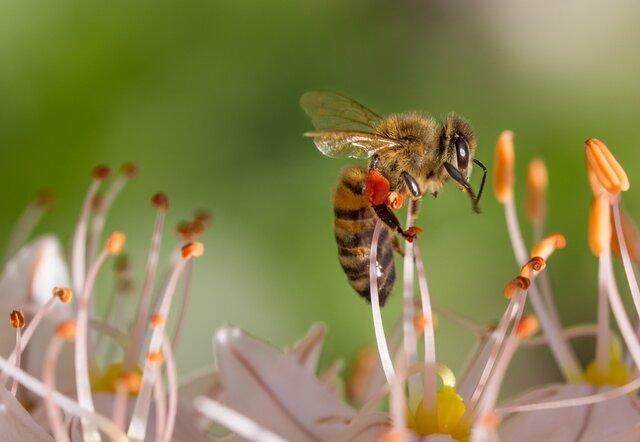 تولید کرم ضد چروک و مرطوبکننده از محصولات طبیعی زنبور عسل