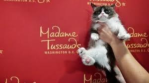 گربه مولتی میلیونر اینستاگرامی مرد +عکس