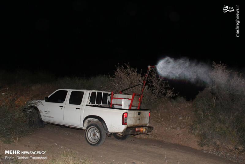مبارزه شبانه با ملخهای صحرایی +عکس