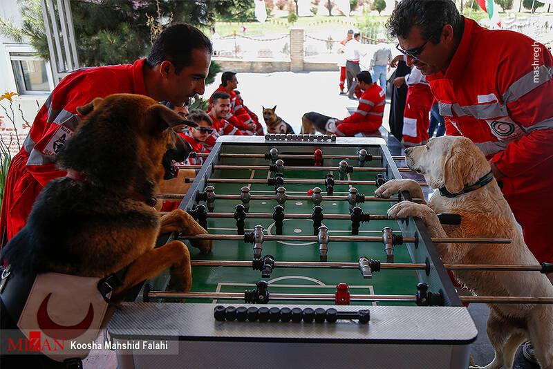 سگهای هلال احمر در حال آموزش فوتبال دستی + عکس