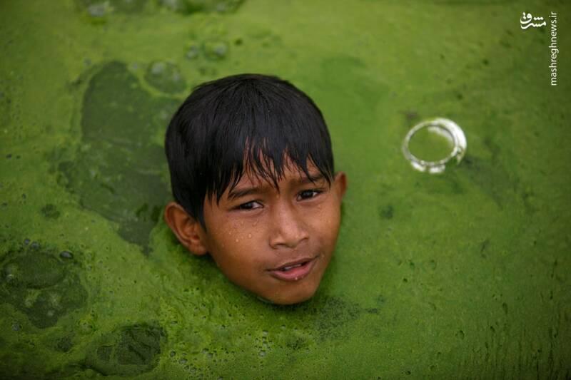 شنا کردن در حوضچه پر از جلبک +عکس