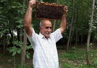 این مرد گیلانی را زنبورها نیش نمیزنند +عکس