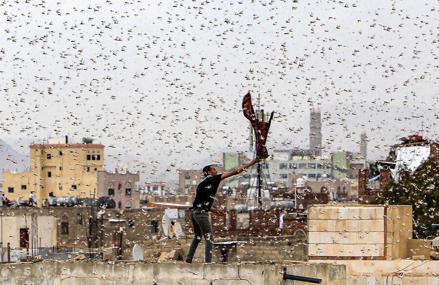 تصویری عجیب از حمله ملخ ها در صنعا +عکس