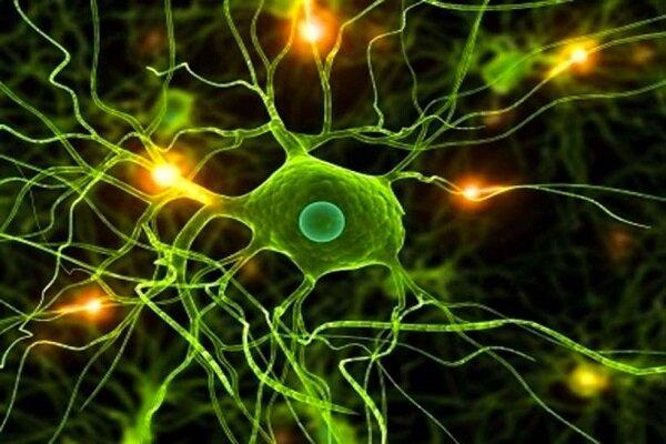 دانشمندان راز احساس درد در بدن را کشف کردند