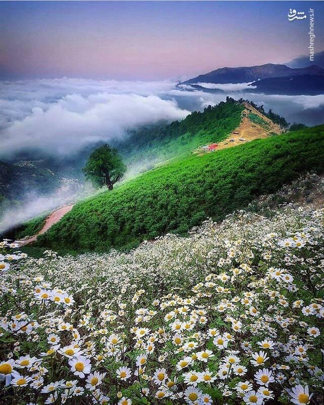 تکهای از بهشت در گیلان + عکس