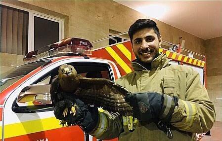 فرود عقاب در حیاط خانه یک تهرانی +عکس