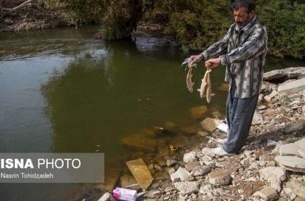تصاویر دردناک از مرگ ماهیهای قرهسو +عکس