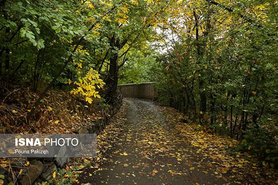 پاییز هزار رنگ همدان +عکس
