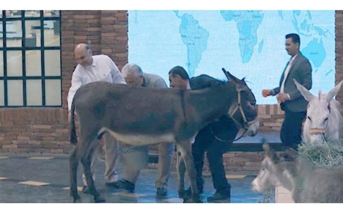 واکنش به دوشیدن شیر خر در تلویزیون! +عکس