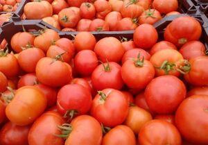 علت گرانی گوجه فرنگی چیست؟