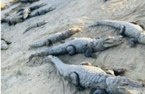 حمله گاندوها به روستاهای سیستان و بلوچستان+عکس