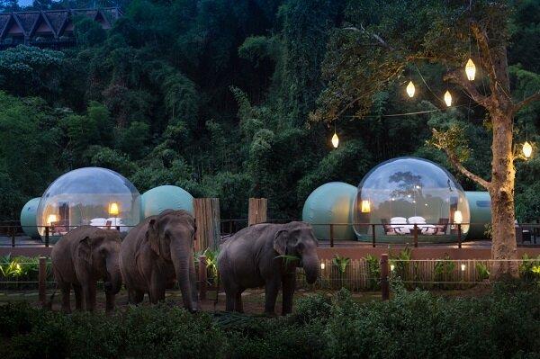 هتل حبابی برای همنشینی با فیلها +عکس