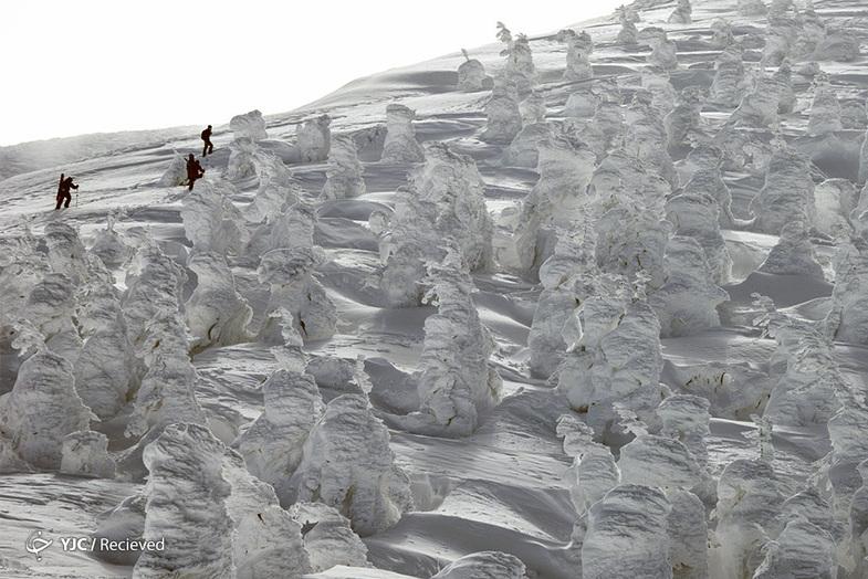 هیولاهایی از جنس برف +عکس