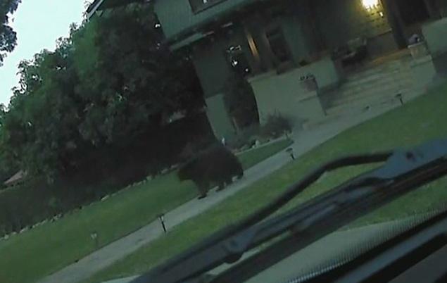 حمله خرس گرسنه به مدرسه ابتدایی +عکس