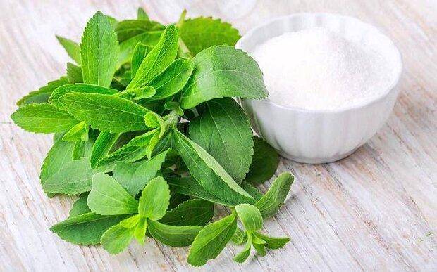 عصاره این گیاه موجب کاهش علائم بیماری کبد چرب میشود
