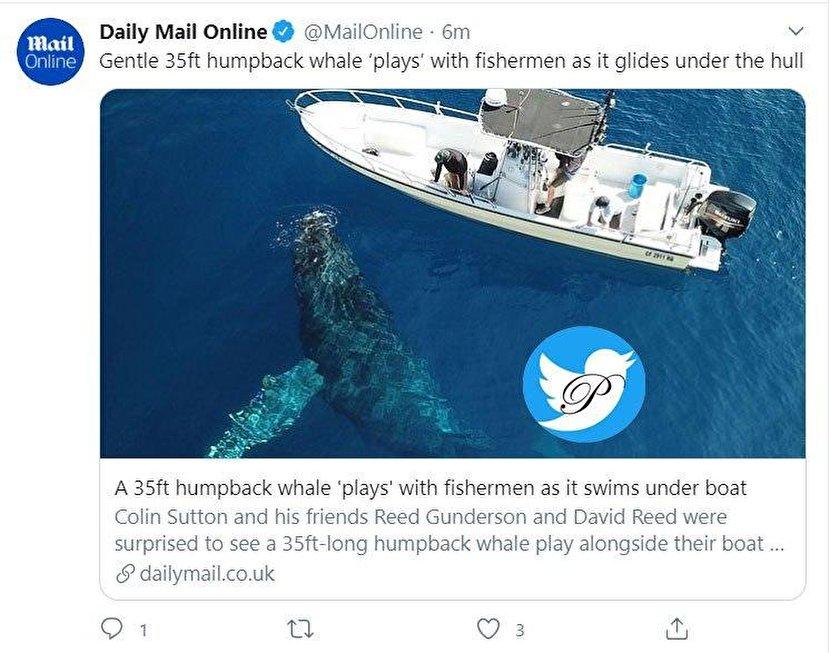 نهنگ ۱۰ متری ماهیگیران را شوکه کرد +عکس