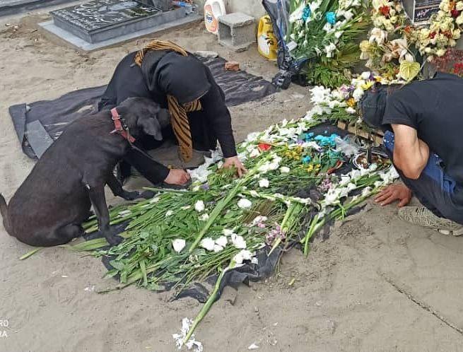 تصویری تلخ از سگ کنار قبر صاحبش در انزلی+عکس
