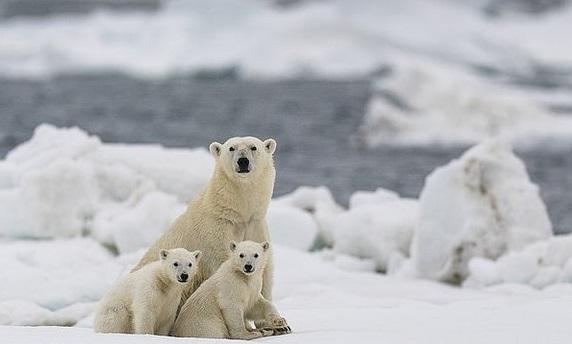 خوشحالی توله خرس قطبی بعد از قرنطینه+عکس