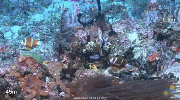 کشف صخره مرجانی عظیم در آب های استرالیا
