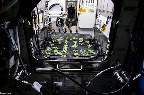 کاشت سبزی خوردن در فضا+عکس