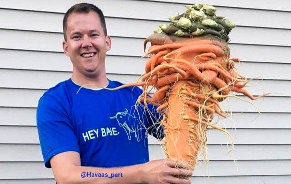 بزرگترین هویج دنیا در دست کشاورز+عکس