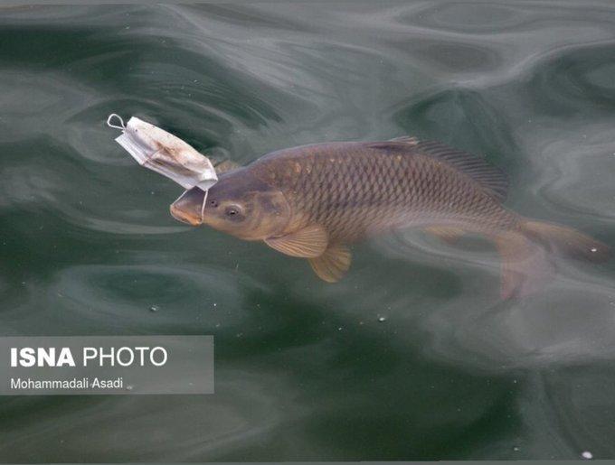 گرفتاری جدید ماهی ها از دست ما+عکس