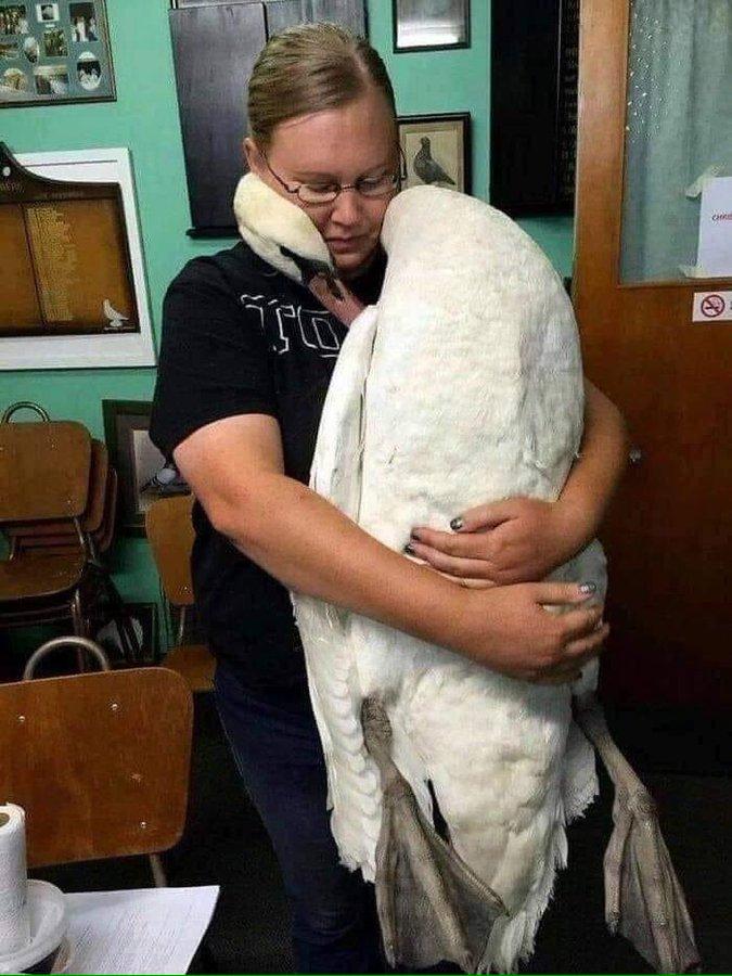 تصویر عجیب از قویی که دامپزشکش را در آغوش کشید+عکس