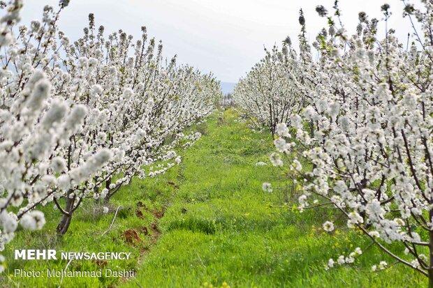 بهشت  اردبیل  در قاب بهار