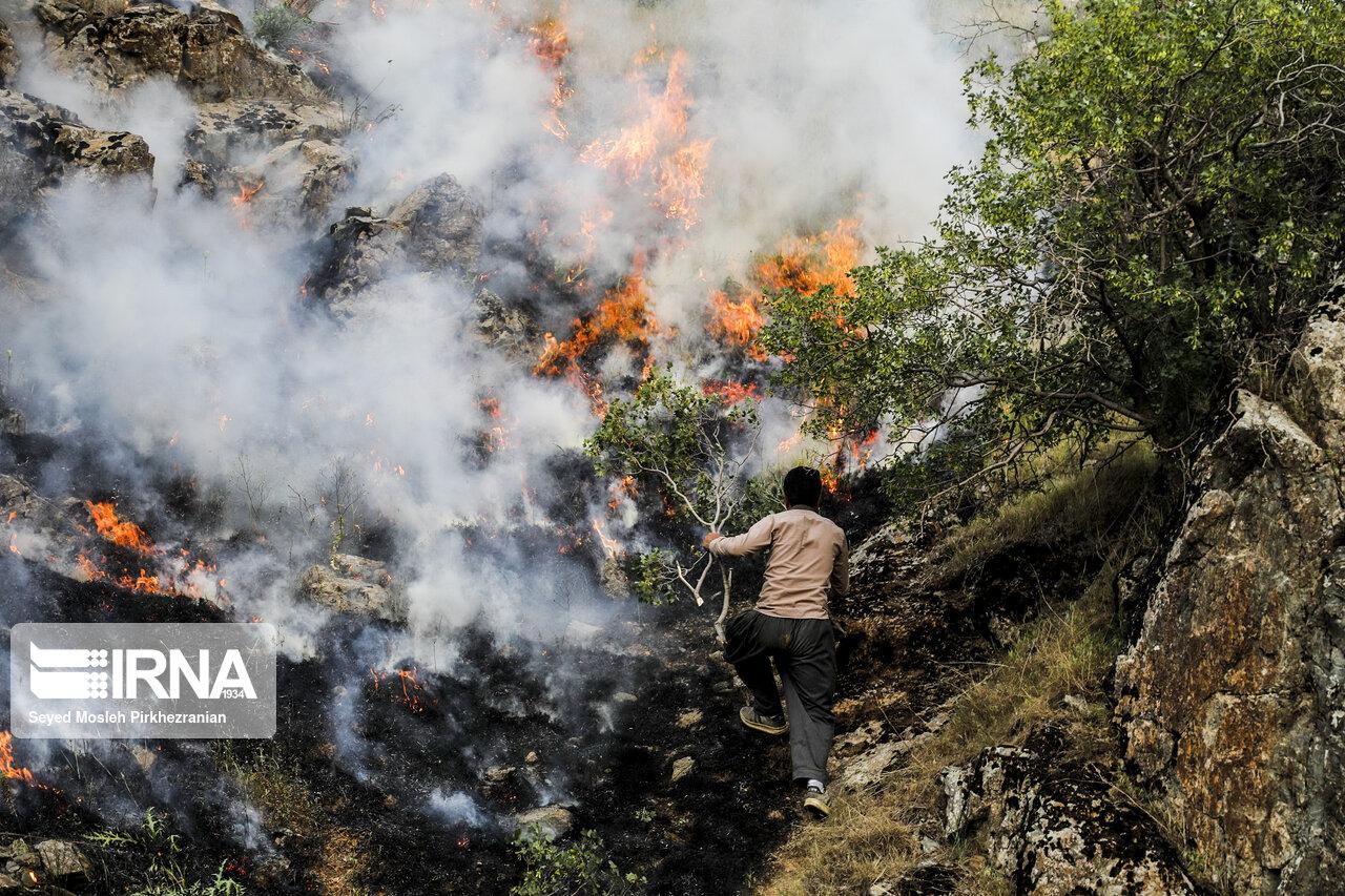 اتش سوزی   در  جنگل های  بلوط  کردستان
