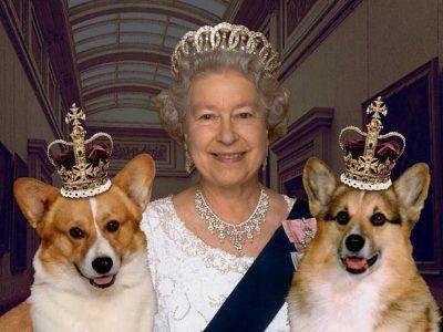 سگ های جدید ملکه انگلیس تاجگذاری کردند+عکس