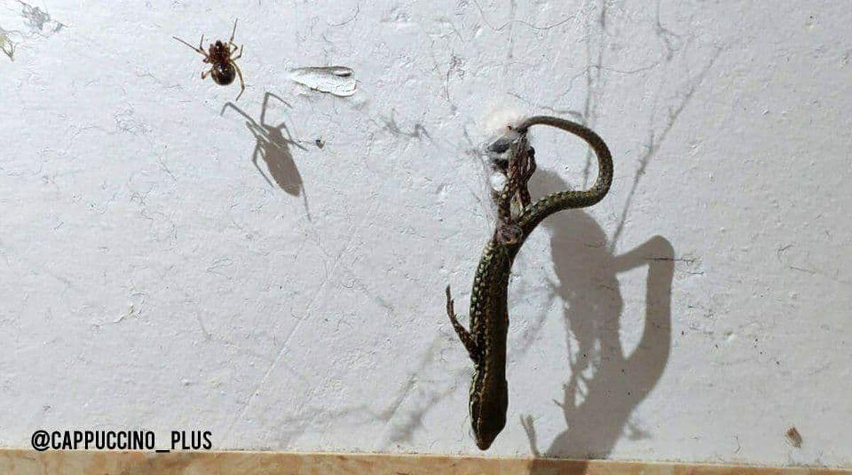 باور کنید این شکار یک عنکبوت است+عکس