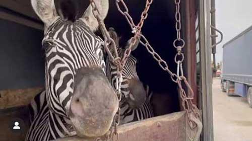 جواب زشت اکانت اینستاگرام باغوحش صفادشت+عکس