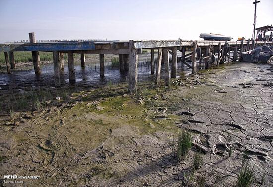 خلیج گرگان در حال مرگ+عکس