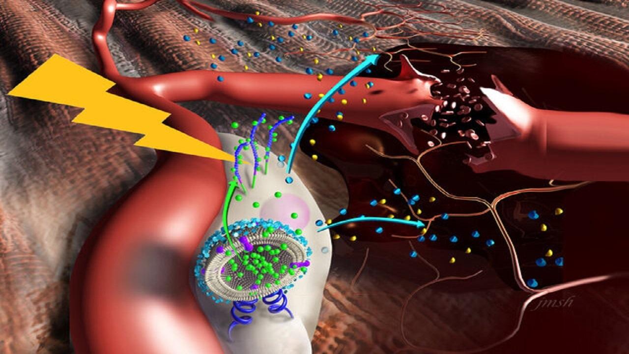 کشف روشی موثر برای ترمیم و بازسازی عضلات از بین رفته